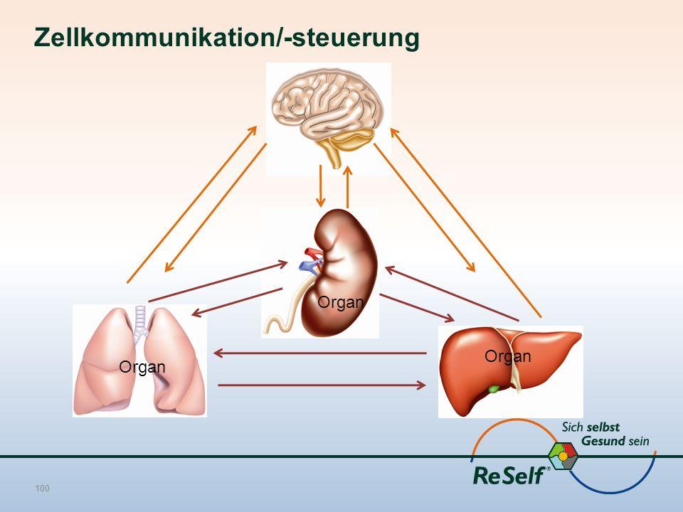 Zellkommunikation/-steuerung 100 Organ
