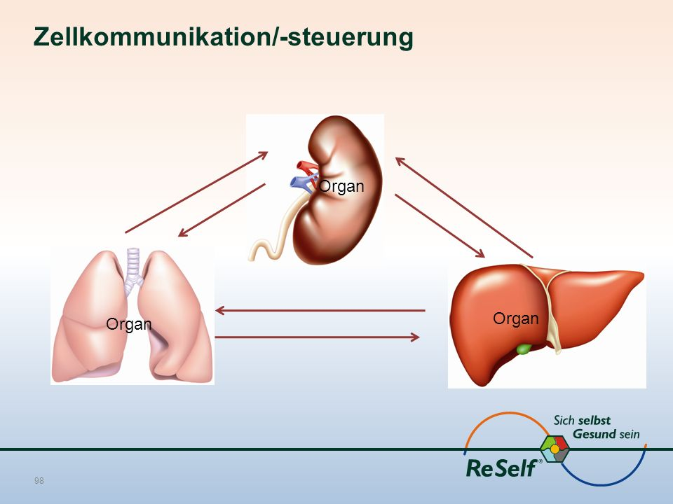 Zellkommunikation/-steuerung 98 Organ