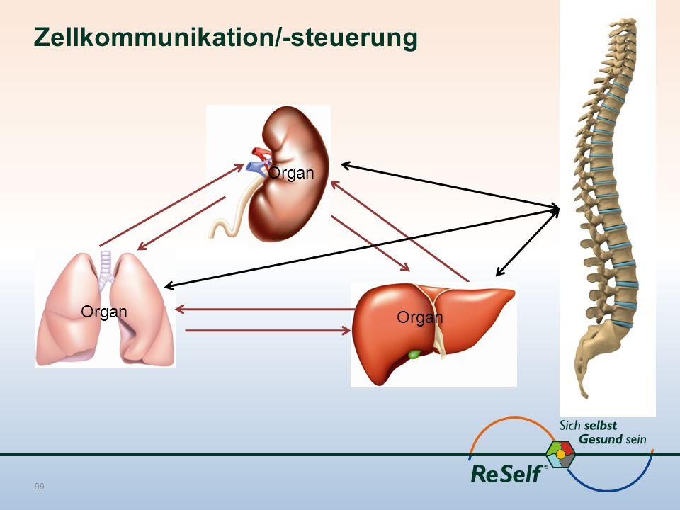 Zellkommunikation/-steuerung 99 Organ