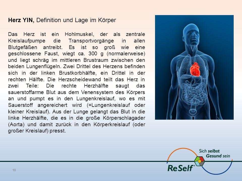 Herz YIN, Definition und Lage im Körper Das Herz ist ein Hohlmuskel, der als zentrale Kreislaufpumpe die Transportvorgänge in allen Blutgefäßen antreibt.