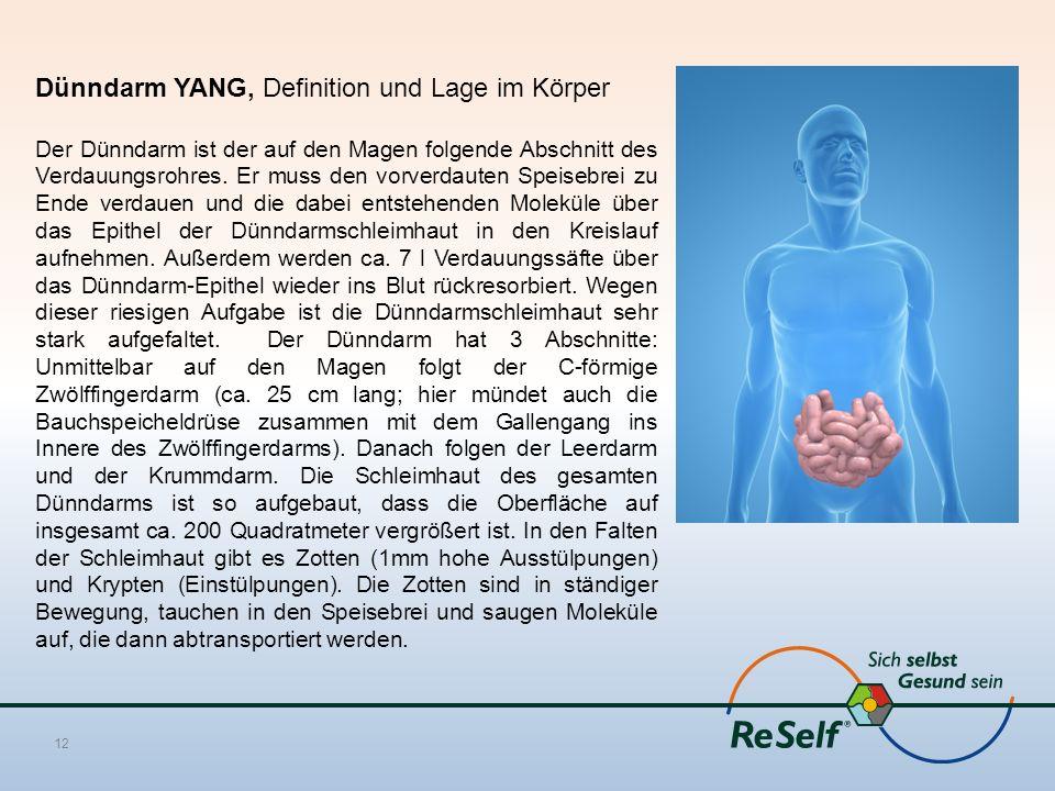 Dünndarm YANG, Definition und Lage im Körper Der Dünndarm ist der auf den Magen folgende Abschnitt des Verdauungsrohres. Er muss den vorverdauten Spei