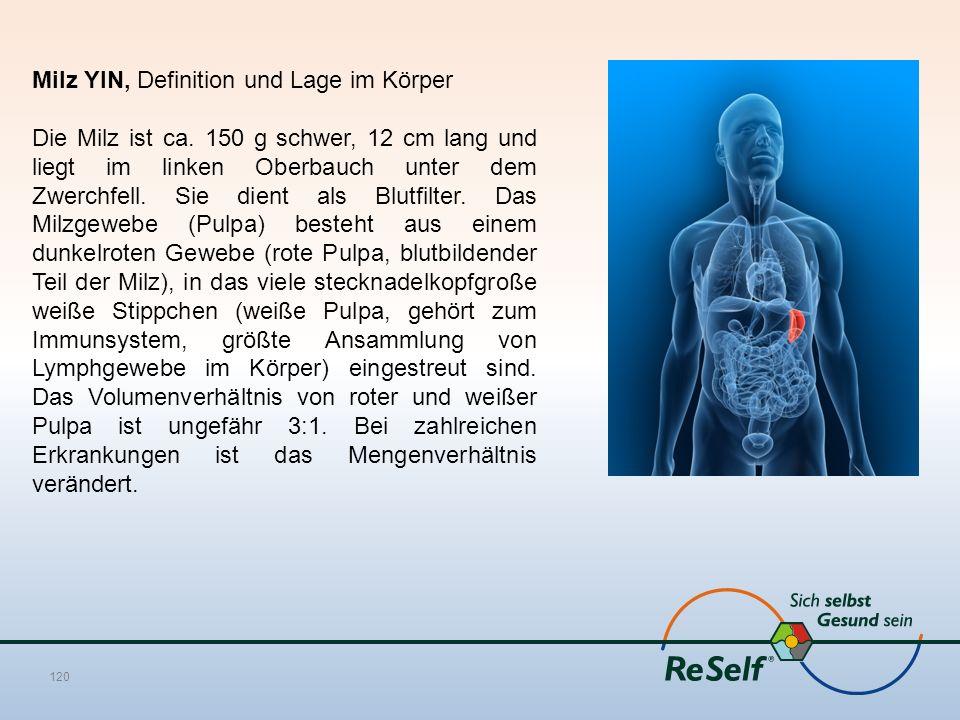 Milz YIN, Definition und Lage im Körper Die Milz ist ca. 150 g schwer, 12 cm lang und liegt im linken Oberbauch unter dem Zwerchfell. Sie dient als Bl