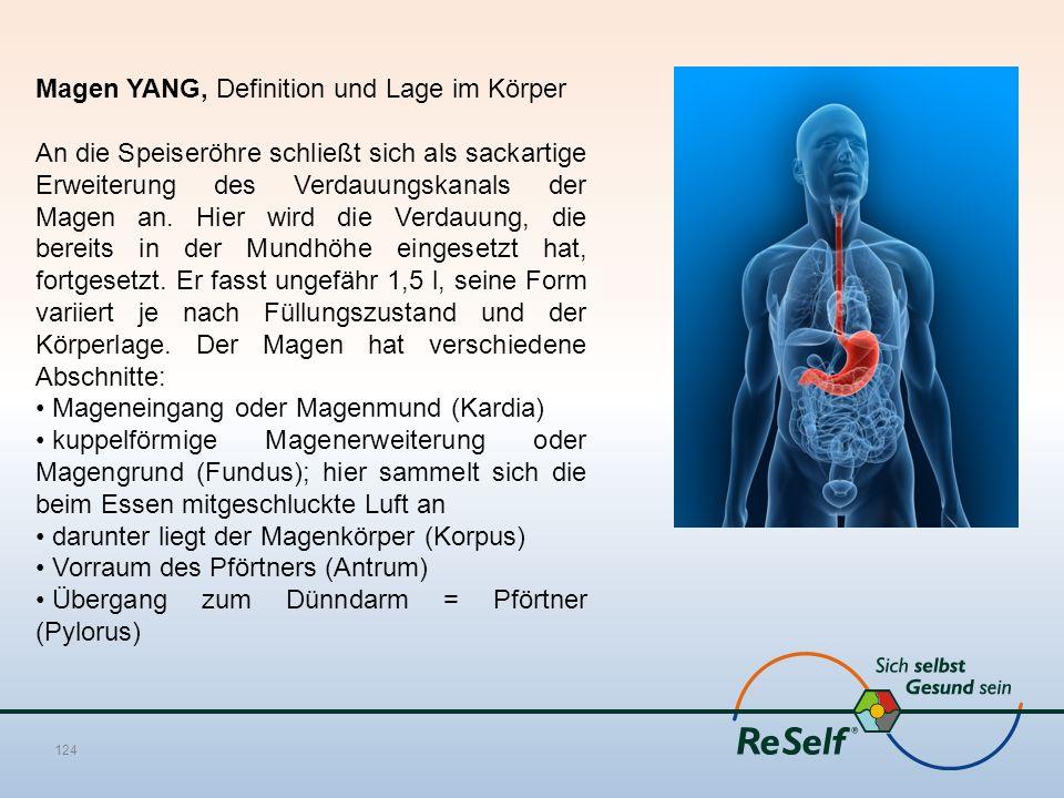 Magen YANG, Definition und Lage im Körper An die Speiseröhre schließt sich als sackartige Erweiterung des Verdauungskanals der Magen an. Hier wird die