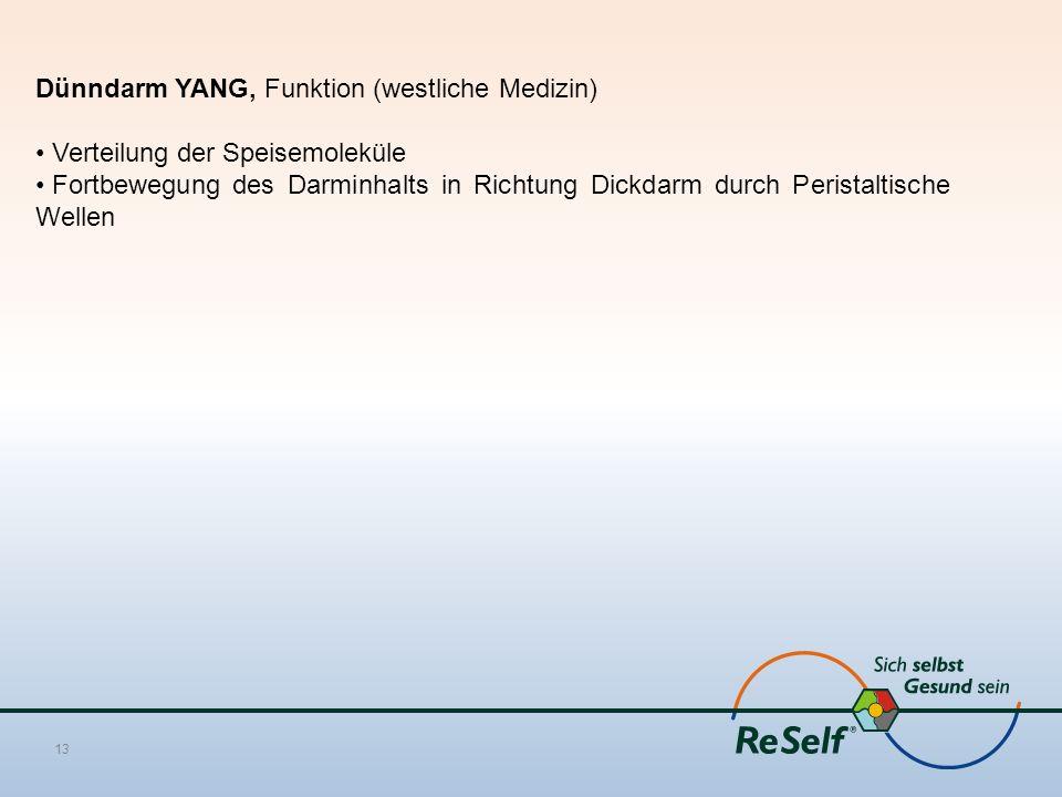 Dünndarm YANG, Funktion (westliche Medizin) Verteilung der Speisemoleküle Fortbewegung des Darminhalts in Richtung Dickdarm durch Peristaltische Wellen 13