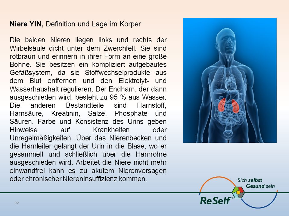Niere YIN, Definition und Lage im Körper Die beiden Nieren liegen links und rechts der Wirbelsäule dicht unter dem Zwerchfell. Sie sind rotbraun und e