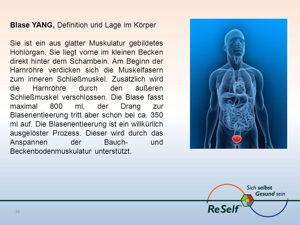 Blase YANG, Definition und Lage im Körper Sie ist ein aus glatter Muskulatur gebildetes Hohlorgan. Sie liegt vorne im kleinen Becken direkt hinter dem