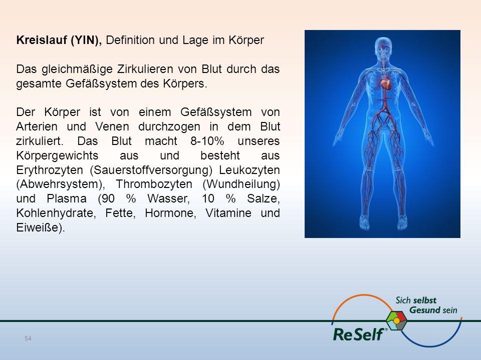 Kreislauf (YIN), Definition und Lage im Körper Das gleichmäßige Zirkulieren von Blut durch das gesamte Gefäßsystem des Körpers. Der Körper ist von ein