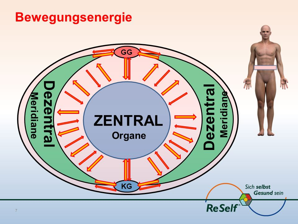 Bewegungsenergie 7 GG KG ZENTRAL Organe Dezentral Meridiane Dezentral Meridiane