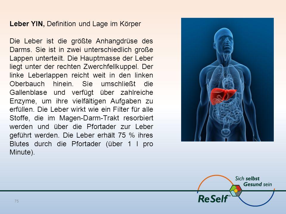Leber YIN, Definition und Lage im Körper Die Leber ist die größte Anhangdrüse des Darms. Sie ist in zwei unterschiedlich große Lappen unterteilt. Die
