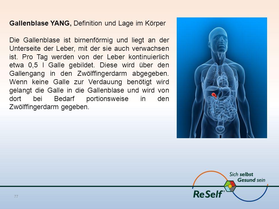 Gallenblase YANG, Definition und Lage im Körper Die Gallenblase ist birnenförmig und liegt an der Unterseite der Leber, mit der sie auch verwachsen ist.