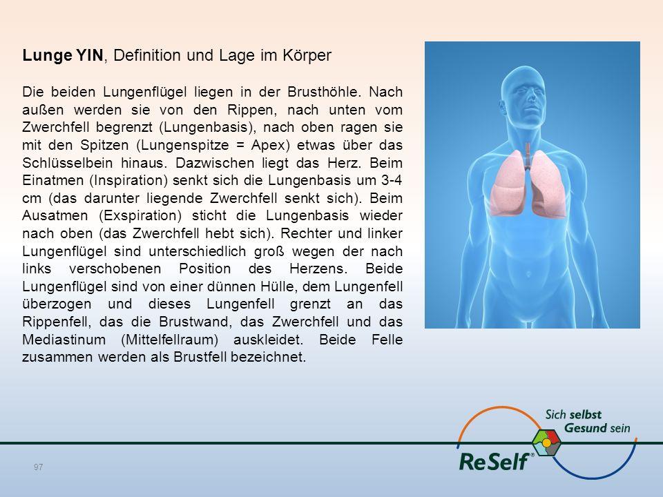 Lunge YIN, Definition und Lage im Körper Die beiden Lungenflügel liegen in der Brusthöhle. Nach außen werden sie von den Rippen, nach unten vom Zwerch