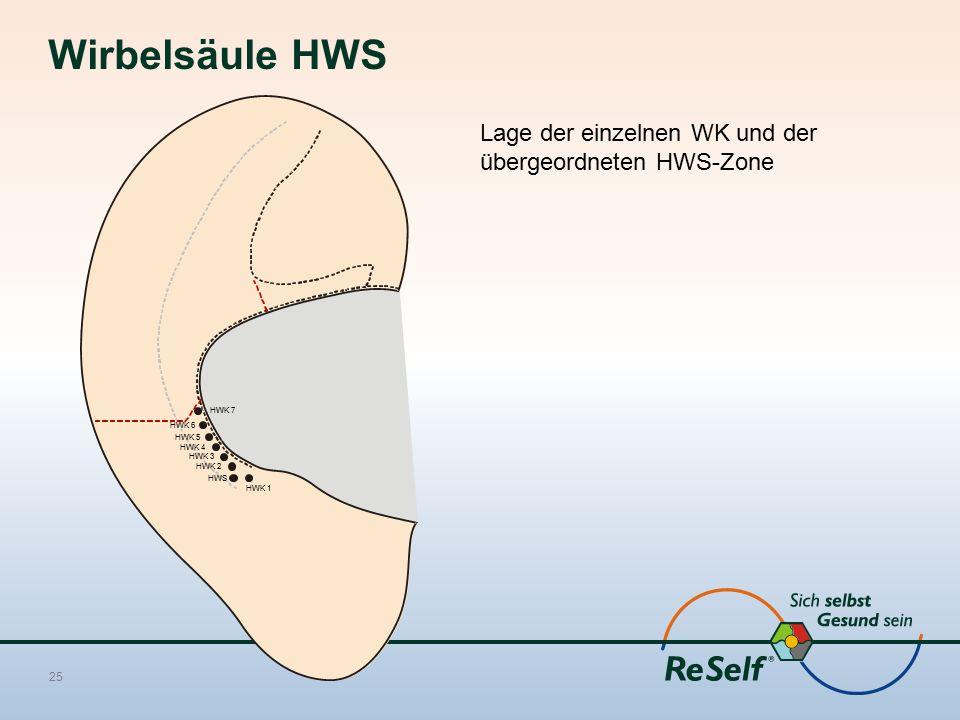 Wirbelsäule HWS Lage der einzelnen WK und der übergeordneten HWS-Zone 25 HWS HWK 1 HWK 2 HWK 3 HWK 4 HWK 5 HWK 6 HWK 7