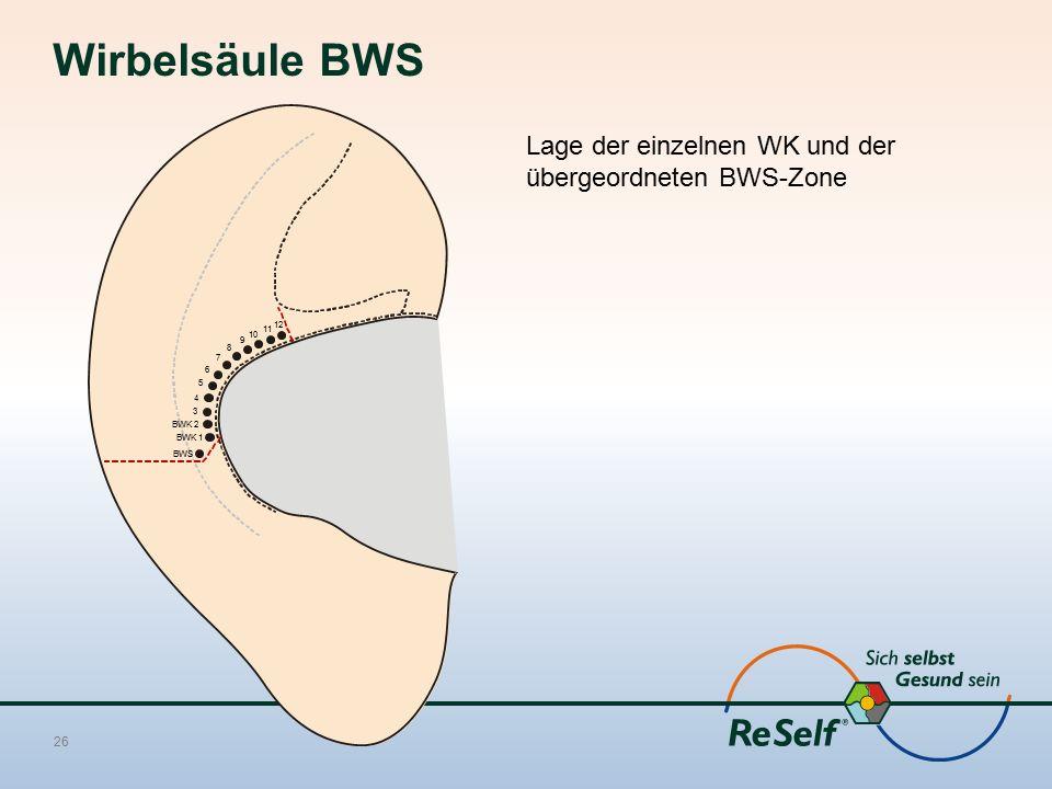 Wirbelsäule BWS Lage der einzelnen WK und der übergeordneten BWS-Zone 26 BWS BWK 1 BWK 2 3 4 5 6 7 8 9 10 11 12