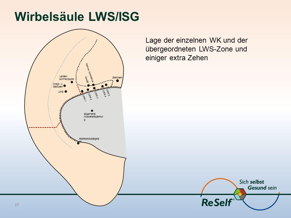 Wirbelsäule LWS/ISG Lage der einzelnen WK und der übergeordneten LWS-Zone und einiger extra Zehen 27 LWK 1 LWK 2 LWK 3 LWK 4 LWK 5 LWS Steißbein Nervu
