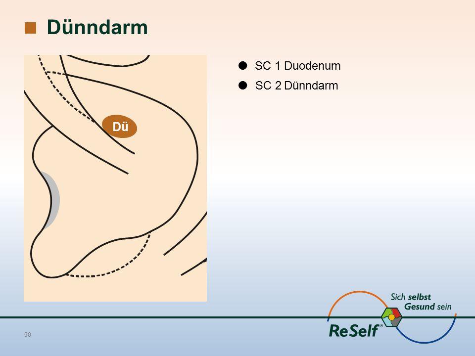 Dünndarm 50  SC 1Duodenum  SC 2Dünndarm Dü
