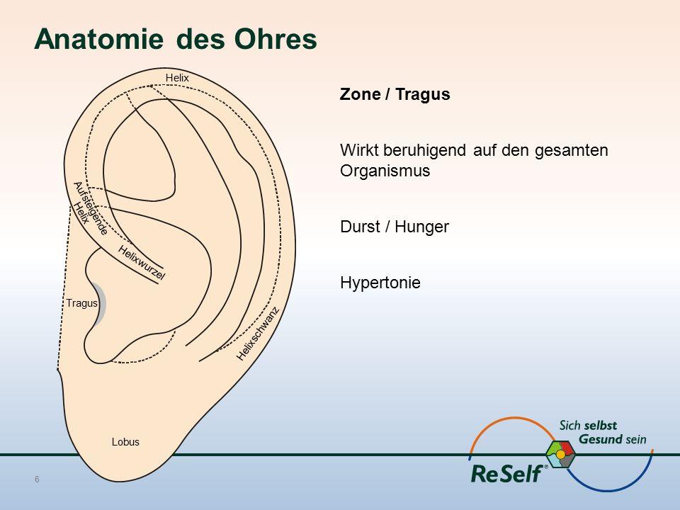 Anatomie des Ohres Zone / Tragus Wirkt beruhigend auf den gesamten Organismus Durst / Hunger Hypertonie 6 Helixwurzel Lobus Helix Aufsteigende Helix T