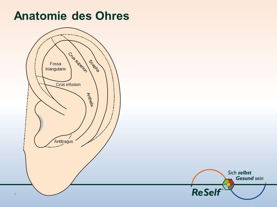 Anatomie des Ohres 7 Fossa triangularis Crus infusion Antitragus Crus superion Scapha Anthelix