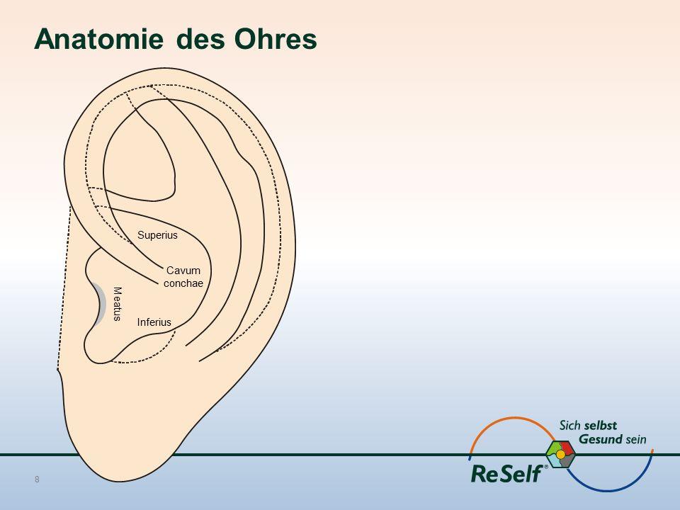 8 Superius Cavum conchae Inferius Meatus Anatomie des Ohres