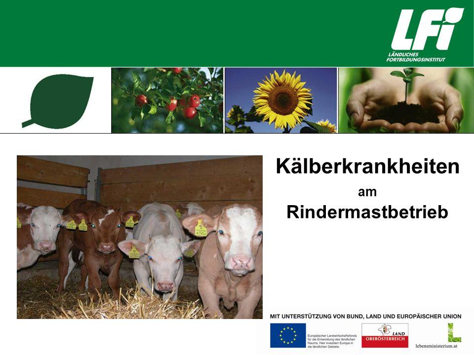 Kälberkrankheiten am Rindermastbetrieb