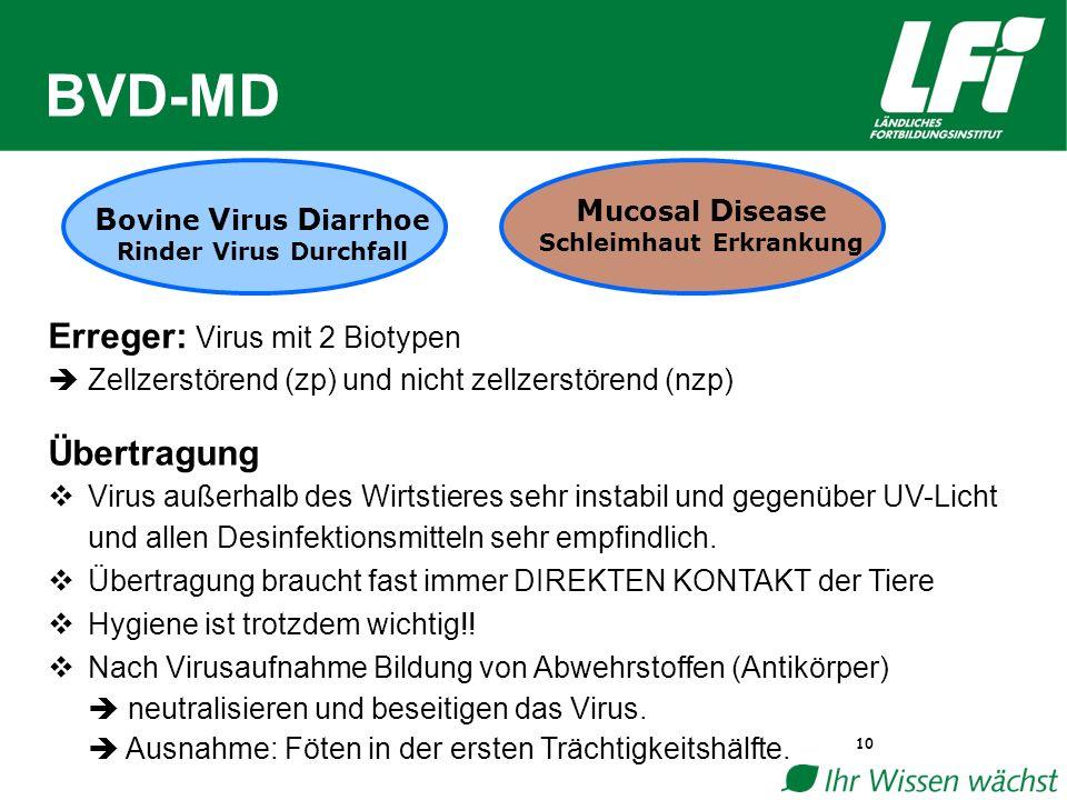 BVD-MD 10 B ovine V irus D iarrhoe Rinder Virus Durchfall M ucosal D isease Schleimhaut Erkrankung Erreger: Virus mit 2 Biotypen  Zellzerstörend (zp) und nicht zellzerstörend (nzp) Übertragung  Virus außerhalb des Wirtstieres sehr instabil und gegenüber UV-Licht und allen Desinfektionsmitteln sehr empfindlich.