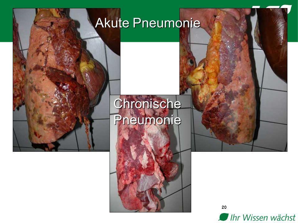 20 Akute Pneumonie Chronische Pneumonie