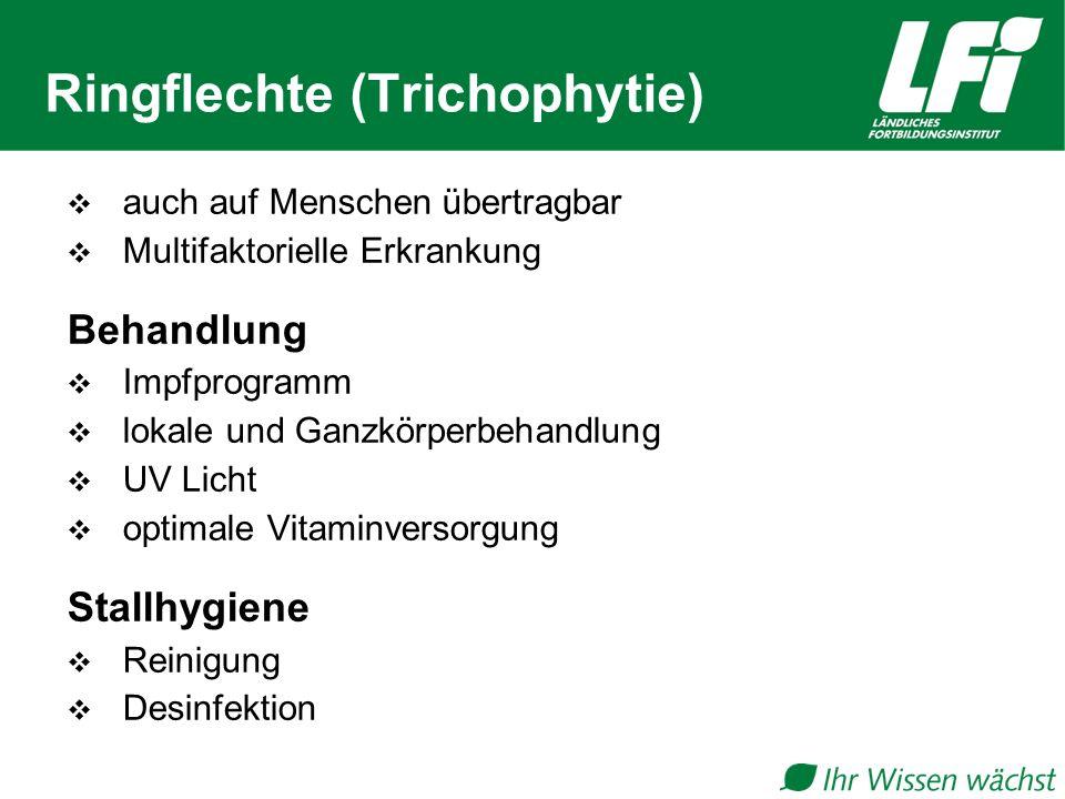 Ringflechte (Trichophytie)  auch auf Menschen übertragbar  Multifaktorielle Erkrankung Behandlung  Impfprogramm  lokale und Ganzkörperbehandlung  UV Licht  optimale Vitaminversorgung Stallhygiene  Reinigung  Desinfektion