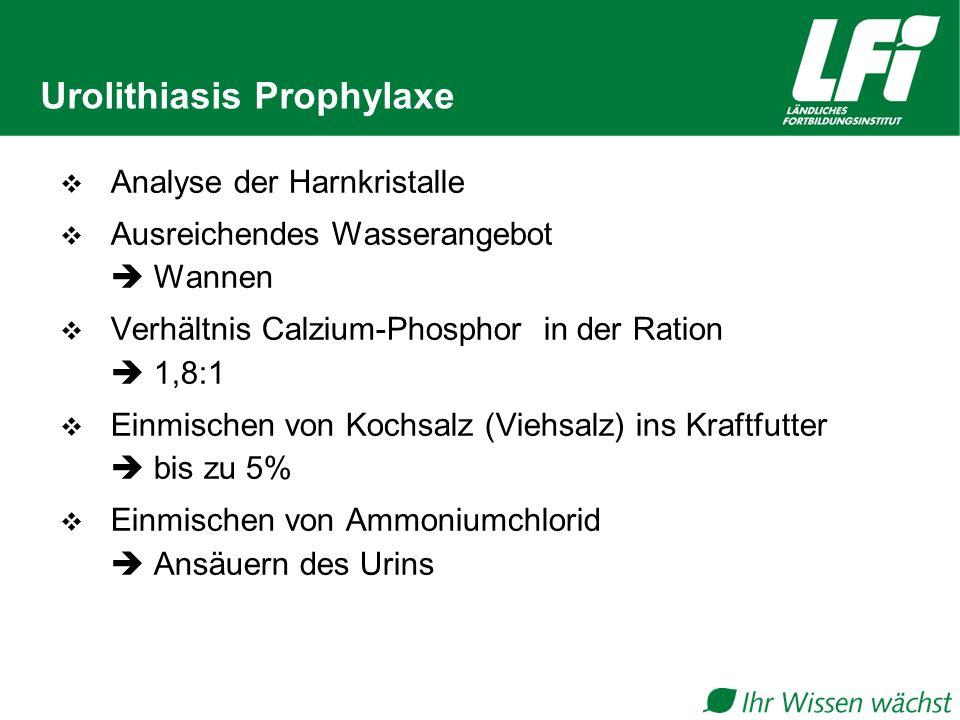 Urolithiasis Prophylaxe  Analyse der Harnkristalle  Ausreichendes Wasserangebot  Wannen  Verhältnis Calzium-Phosphor in der Ration  1,8:1  Einmischen von Kochsalz (Viehsalz) ins Kraftfutter  bis zu 5%  Einmischen von Ammoniumchlorid  Ansäuern des Urins