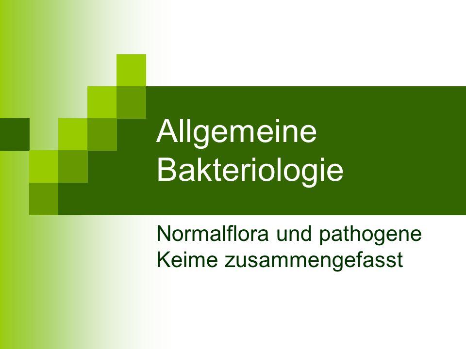 Allgemeine Bakteriologie Normalflora und pathogene Keime zusammengefasst