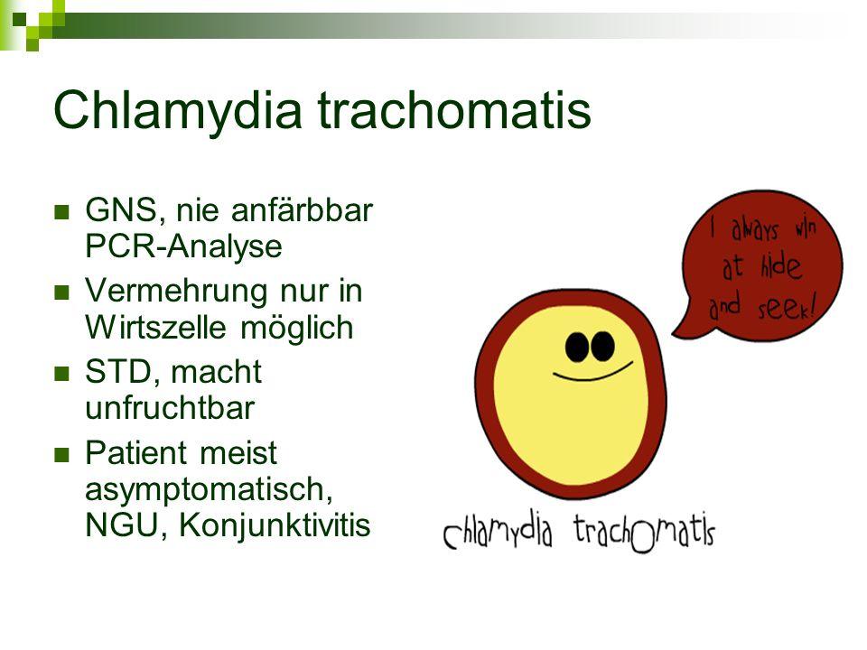 Chlamydia trachomatis GNS, nie anfärbbar PCR-Analyse Vermehrung nur in Wirtszelle möglich STD, macht unfruchtbar Patient meist asymptomatisch, NGU, Ko