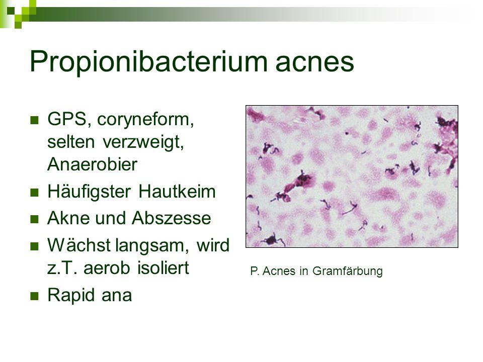 Propionibacterium acnes GPS, coryneform, selten verzweigt, Anaerobier Häufigster Hautkeim Akne und Abszesse Wächst langsam, wird z.T. aerob isoliert R