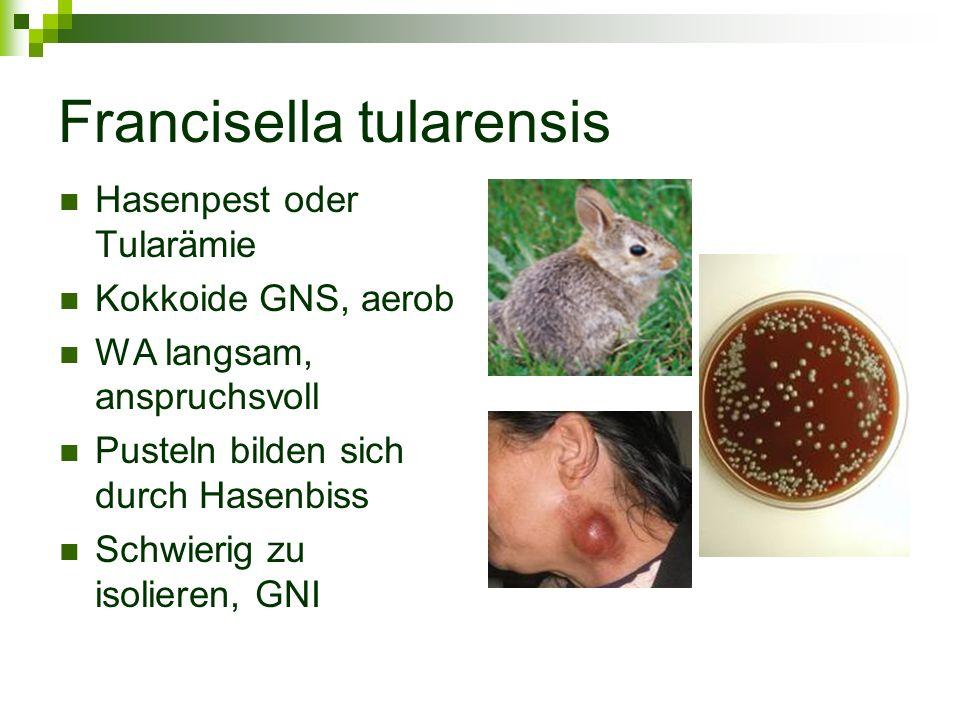 Francisella tularensis Hasenpest oder Tularämie Kokkoide GNS, aerob WA langsam, anspruchsvoll Pusteln bilden sich durch Hasenbiss Schwierig zu isolier