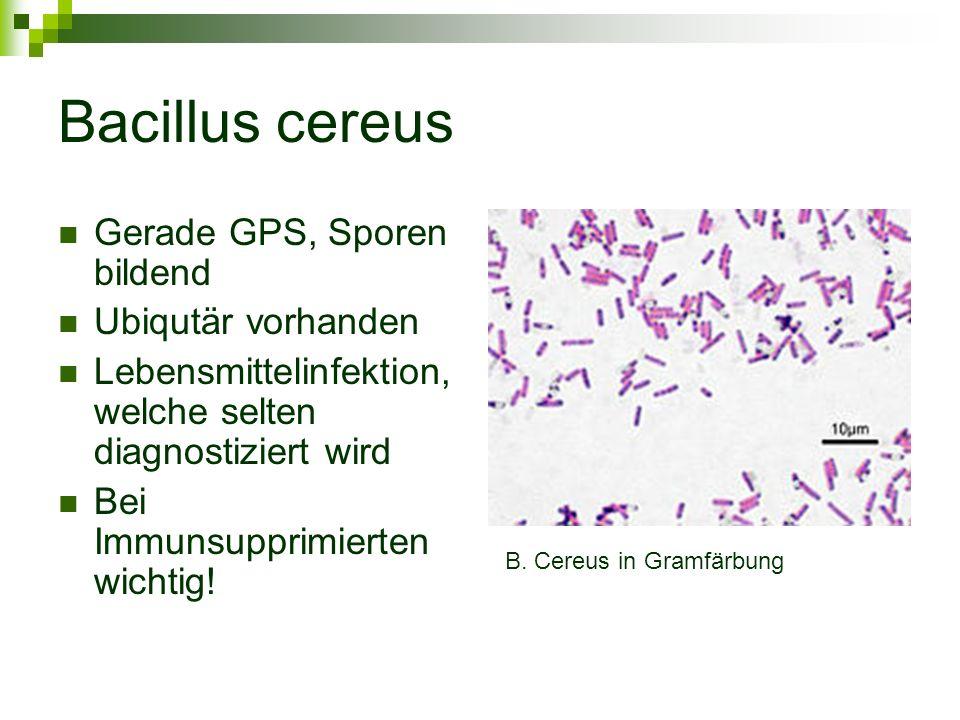 Bacillus cereus Gerade GPS, Sporen bildend Ubiqutär vorhanden Lebensmittelinfektion, welche selten diagnostiziert wird Bei Immunsupprimierten wichtig!