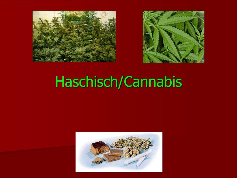 Haschisch/Cannabis