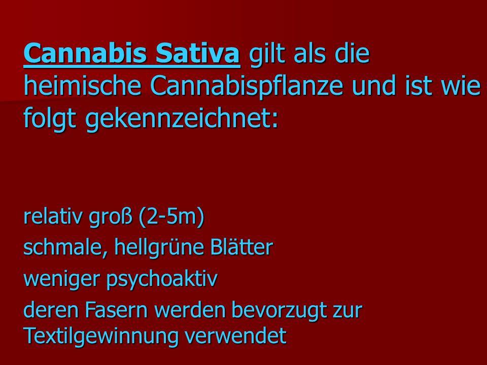 Cannabis Sativa gilt als die heimische Cannabispflanze und ist wie folgt gekennzeichnet: relativ groß (2-5m) schmale, hellgrüne Blätter weniger psychoaktiv deren Fasern werden bevorzugt zur Textilgewinnung verwendet