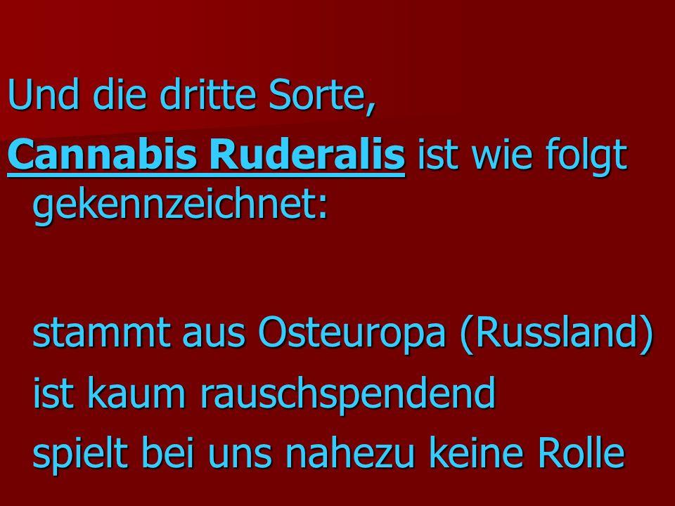 Und die dritte Sorte, Cannabis Ruderalis ist wie folgt gekennzeichnet: stammt aus Osteuropa (Russland) ist kaum rauschspendend spielt bei uns nahezu keine Rolle