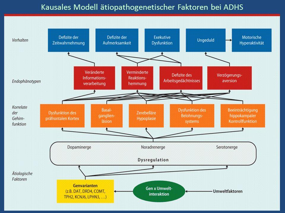 Kausales Modell ätiopathogenetischer Faktoren bei ADHS