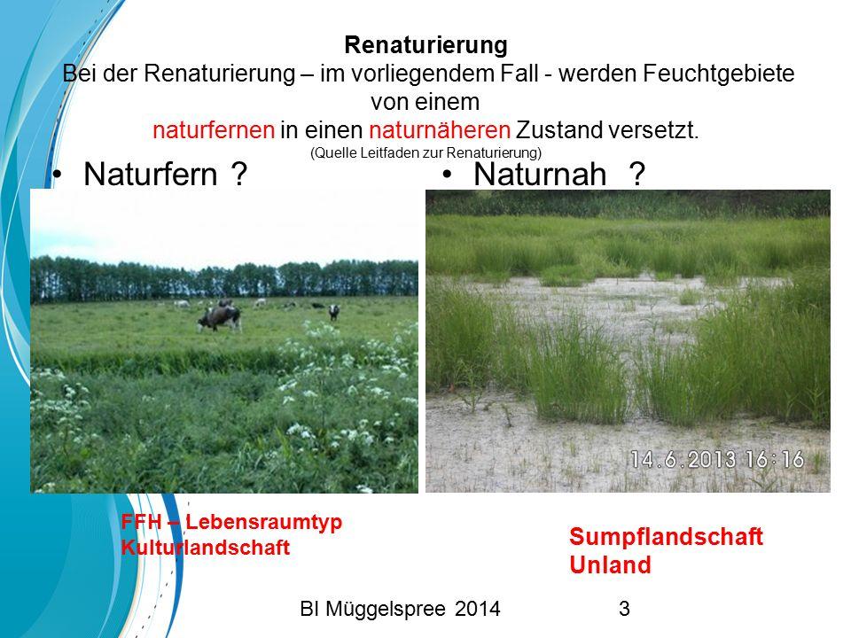 Renaturierung Bei der Renaturierung – im vorliegendem Fall - werden Feuchtgebiete von einem naturfernen in einen naturnäheren Zustand versetzt. (Quell