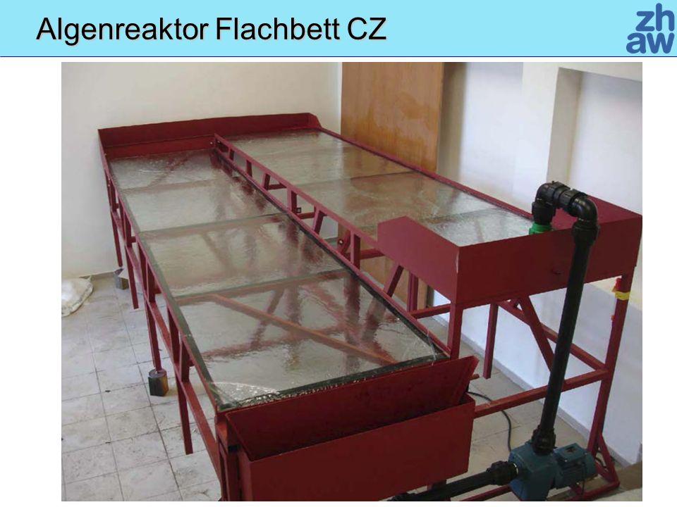 Algenreaktor Flachbett CZ