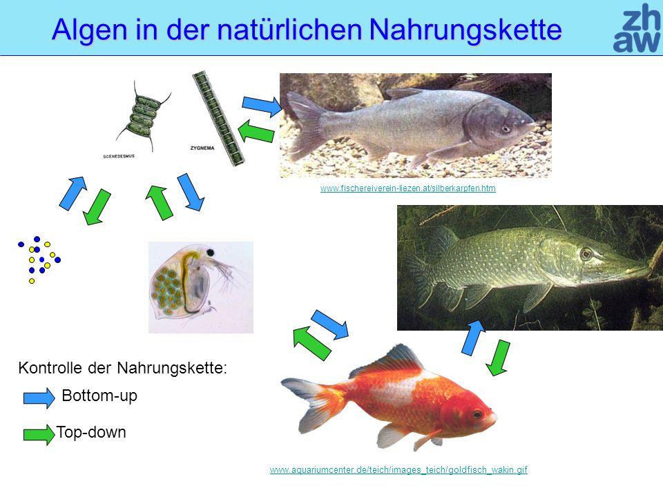 Algen in der natürlichen Nahrungskette Bottom-up Top-down www.fischereiverein-liezen.at/silberkarpfen.htm www.aquariumcenter.de/teich/images_teich/goldfisch_wakin.gif Kontrolle der Nahrungskette:
