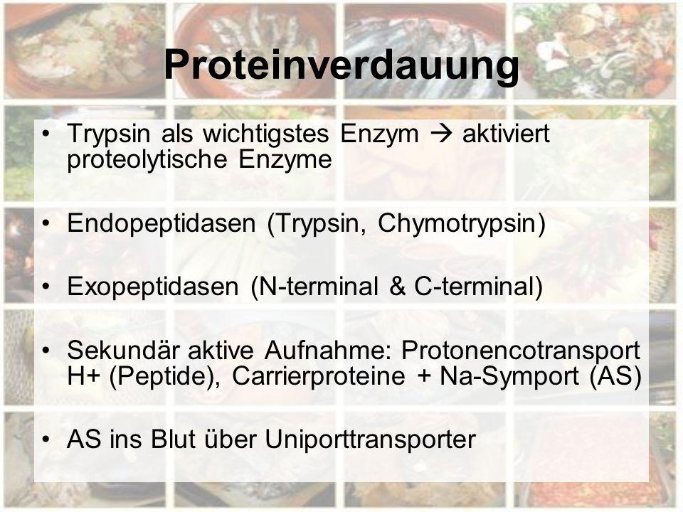 Proteinverdauung Trypsin als wichtigstes Enzym  aktiviert proteolytische Enzyme Endopeptidasen (Trypsin, Chymotrypsin) Exopeptidasen (N-terminal & C-terminal) Sekundär aktive Aufnahme: Protonencotransport H+ (Peptide), Carrierproteine + Na-Symport (AS) AS ins Blut über Uniporttransporter