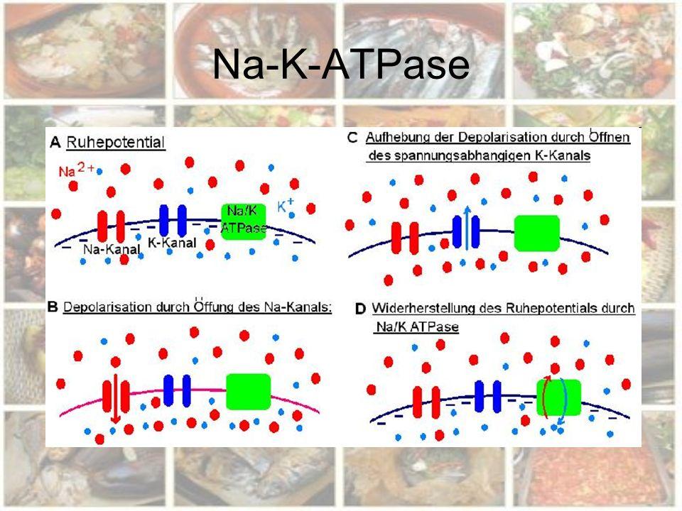 Na-K-ATPase