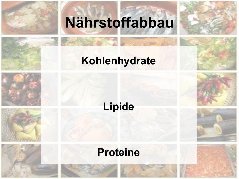 Nährstoffabbau Kohlenhydrate Lipide Proteine