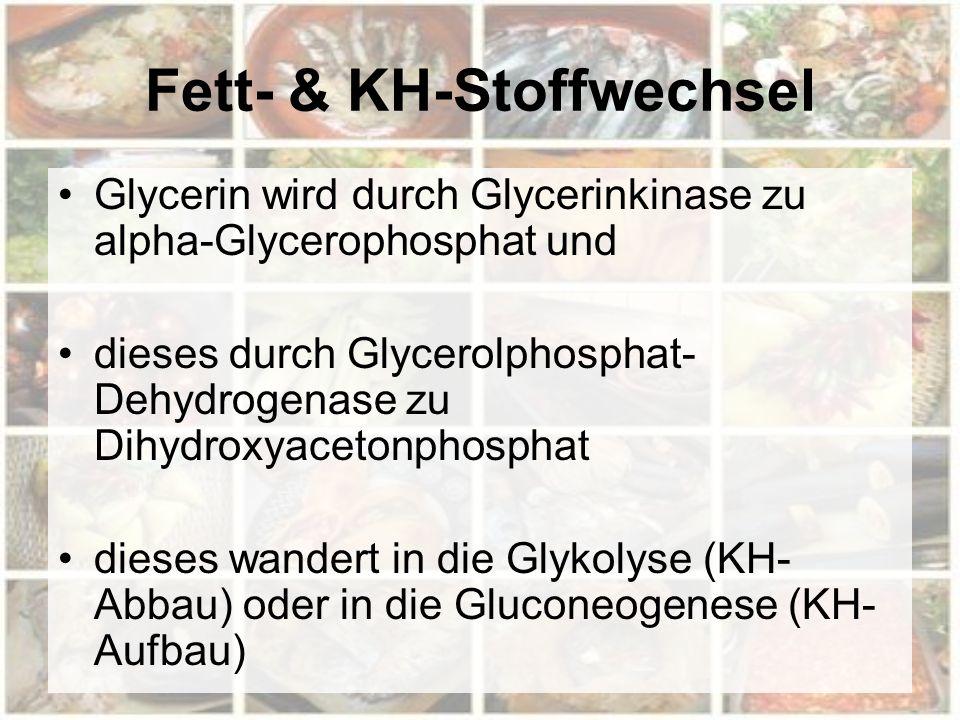 Fett- & KH-Stoffwechsel Glycerin wird durch Glycerinkinase zu alpha-Glycerophosphat und dieses durch Glycerolphosphat- Dehydrogenase zu Dihydroxyaceto