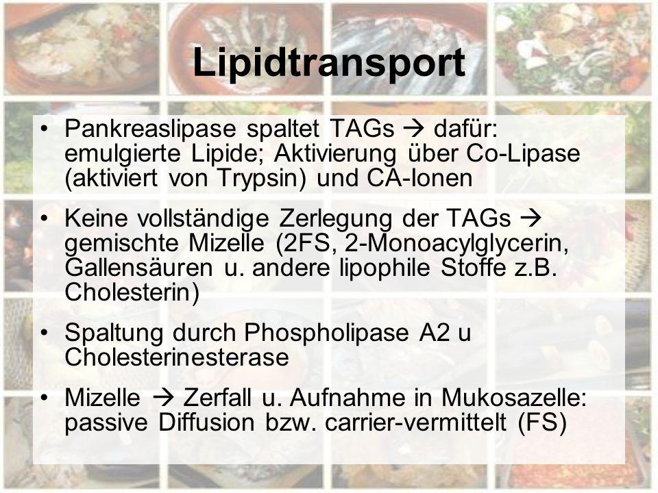 Lipidtransport Pankreaslipase spaltet TAGs  dafür: emulgierte Lipide; Aktivierung über Co-Lipase (aktiviert von Trypsin) und CA-Ionen Keine vollständige Zerlegung der TAGs  gemischte Mizelle (2FS, 2-Monoacylglycerin, Gallensäuren u.