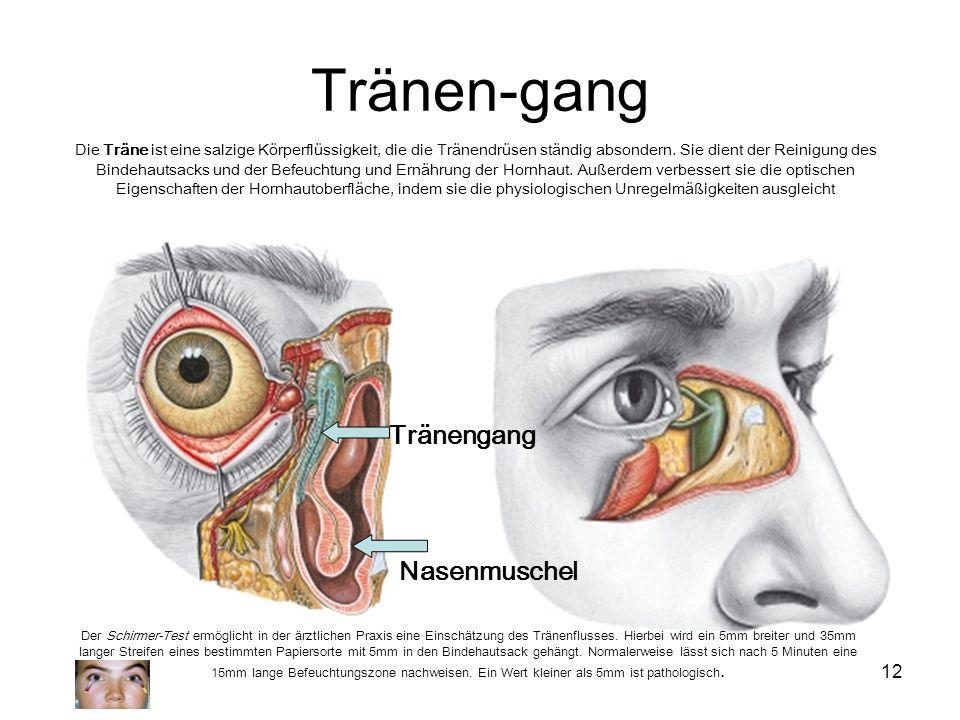 12 Tränen-gang Nasenmuschel Tränengang Die Träne ist eine salzige Körperflüssigkeit, die die Tränendrüsen ständig absondern. Sie dient der Reinigung d
