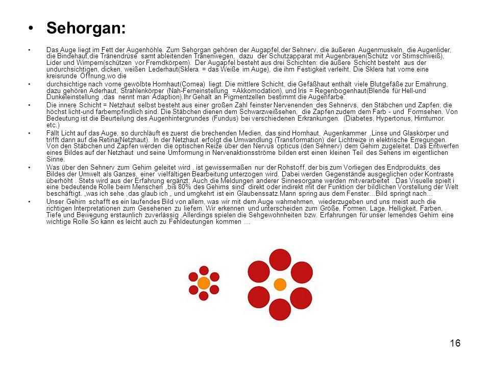 16 Sehorgan: Das Auge liegt im Fett der Augenhöhle. Zum Sehorgan gehören der Augapfel,der Sehnerv, die äußeren Augenmuskeln, die Augenlider, die Binde