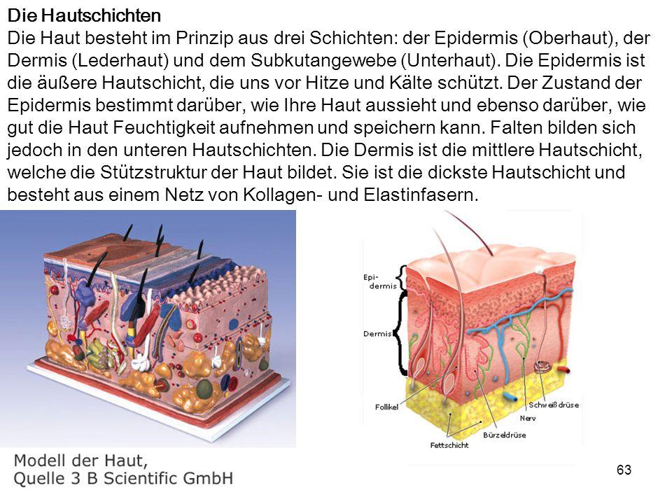 63 Die Hautschichten Die Haut besteht im Prinzip aus drei Schichten: der Epidermis (Oberhaut), der Dermis (Lederhaut) und dem Subkutangewebe (Unterhau