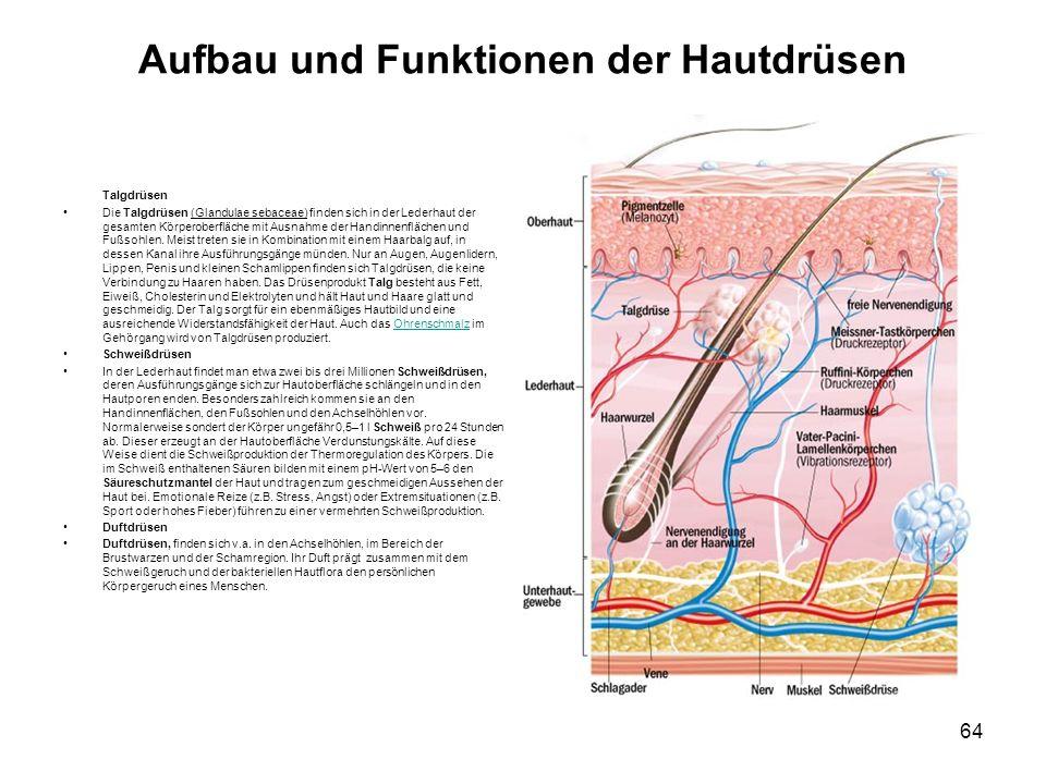 Aufbau und Funktionen der Hautdrüsen Talgdrüsen Die Talgdrüsen (Glandulae sebaceae) finden sich in der Lederhaut der gesamten Körperoberfläche mit Aus