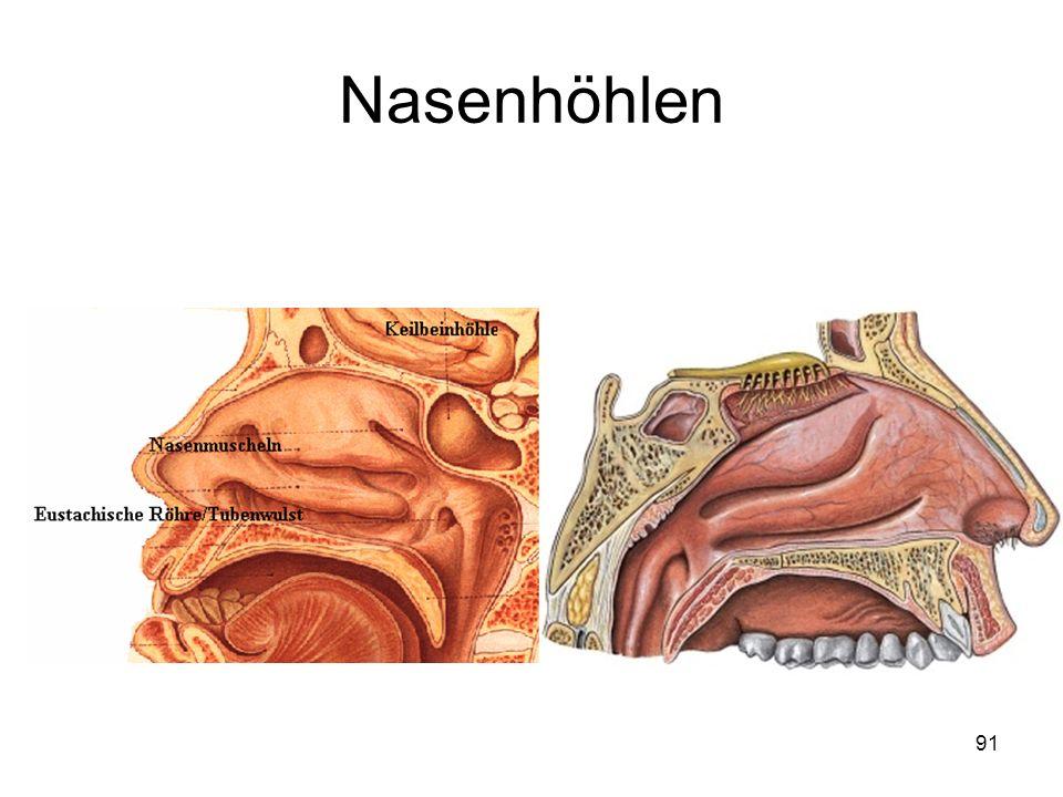 91 Nasenhöhlen