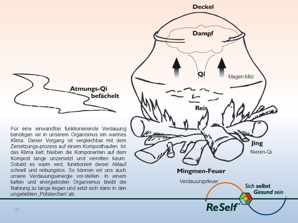 22 Verdauungsfeuer Magen Milz Nieren-Qi Für eine einwandfrei funktionierende Verdauung benötigen wir in unserem Organismus ein warmes Klima.